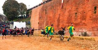 Calliano (Asti), the donkeys race. Color image Stock Photos