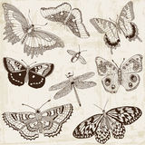 Calligraphic Butterfly Design Elements Royalty Free Stock Photos
