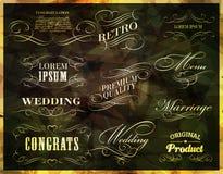 Calligraphic design elements.  Stock Photo