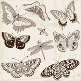 Calligraphic fjärilsdesignbeståndsdelar stock illustrationer