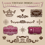 Calligraphic vintage elements Congratulation Royalty Free Stock Image