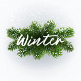 Calligraphic writing Winter on christmas branches. Winter postcard. White inscription on festive background. Christmas tree branches, snow and typographic Stock Photo