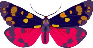 Callimorpha moth. Moth of Arctiidae family stock illustration