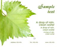 Calling card. Wet grape leaves isolated Royalty Free Stock Image
