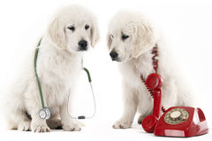 Calling the vet Royalty Free Stock Photo