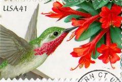Calliope Hummingbird ilustração stock