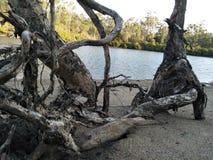 Calliope QLD Australie d'arbre de côté de lac photographie stock