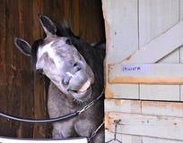Saratoga Racing Backstretch Photos royalty free stock photos