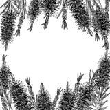 Callistemon doodle kaart stock illustratie