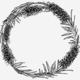 Callistemon Figura rotonda Disegnato a mano fotografia stock libera da diritti