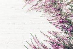 Calluna cor-de-rosa bonito vulgar, Erica do quadro da urze da flor, molva na opinião superior do fundo rústico branco fotos de stock