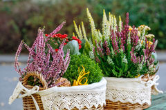 Calluna, hebe and kalanchoe Stock Images