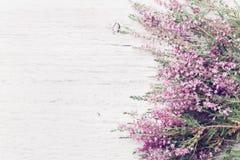 Calluna rosado vulgaris, Erica, ling de la frontera de la flor del brezo en la opinión de arriba de la tabla rústica blanca Tarje imagenes de archivo