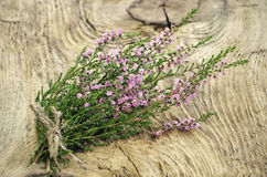 Calluna vulgaris (common heather) flowers Stock Photography