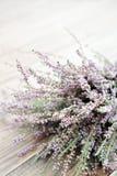 Calluna vulgaris, heather Stock Photo