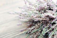 Calluna vulgaris, heather Stock Images