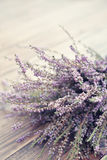 Calluna vulgaris, heather Royalty Free Stock Photo
