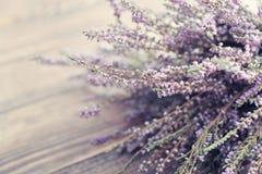 Calluna vulgaris, heather Royalty Free Stock Photos