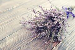 Calluna vulgaris, wrzos Zdjęcia Stock