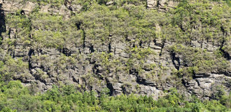 Callys covered by meadow. Photo of callys formed through rock collision, covered by meadow and tree Stock Photo