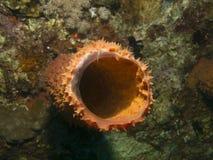 Callyspongia coralino suave del tubo en un lado de la ruina de la nave fotografía de archivo