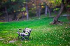 Bench in park. Calm athmosphere of green world Royalty Free Stock Image