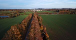 Calm autumn evening view over yellow birch alley with the view on small city in East North Europe stock video
