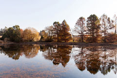 Calm autumn lake Stock Photos