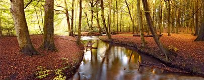 Calm autumn river. Autumn forest and calm river (Denmark Royalty Free Stock Images