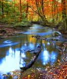 Calm autumn river. Autumn forest and calm river (Denmark Royalty Free Stock Image