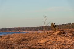 Calm Baltic sea seashore beach background in golden hour. Calm Baltic sea background in golden hour beach sand dune grass latvia sunset path landscape sky coast stock images