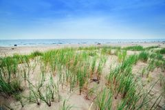 Calm beach with dunes and green grass Royalty Free Stock Images