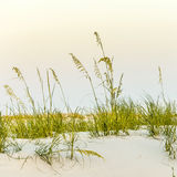 Calm beach with dunes and green grass Stock Photos