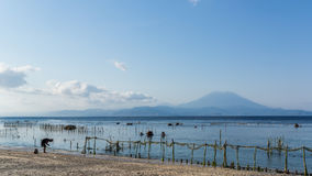 Calm beach and seaweed farm with the Gunung Agung Volcano in the background in Nusa Penida, in Bali, Indonesia. A seaweed farm and some farmers working at a Stock Photography