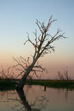Calm Billabong of Kakadu Stock Photo