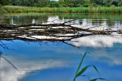 Calm blue lake with branches Royalty Free Stock Photography