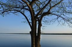 Calm blue lake water with single tree against blue sky Royalty Free Stock Image