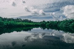 Calm Body of Water Near Tall Trees at Daytime royalty free stock photos