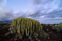 Calm Cactus Desert Sunset. In Tenerife Canary Island Stock Photo