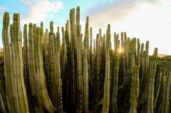 Calm Cactus Desert Sunset. In Tenerife Canary Island royalty free stock photos