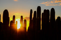 Calm Cactus Desert Sunset. In Tenerife Canary Island Stock Photos