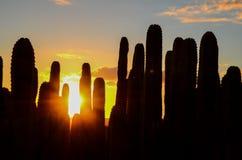 Calm Cactus Desert Sunset Stock Photos