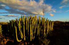 Calm Cactus Desert Sunset. In Tenerife Canary Island Stock Photography