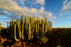 Calm Cactus Desert Sunset. In Tenerife Canary Island Stock Images