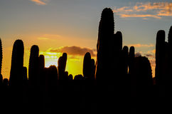 Calm Cactus Desert Sunset Royalty Free Stock Photos