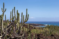 Calm Cactus in Volcanic Area in front of Coastline of Tenerife Island, Canary, Spain Royalty Free Stock Photo