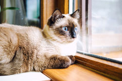 Calm cat Stock Photography
