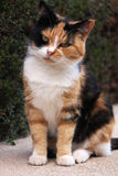 Calm cat Royalty Free Stock Photos