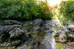 Calm clear creek Royalty Free Stock Photography