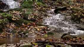 Calm creek waterfall deep in the woods stock video